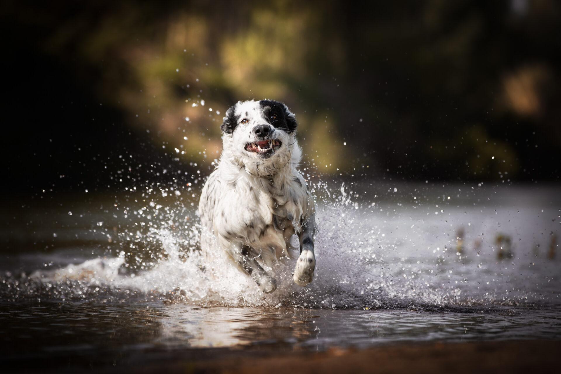 Dog Photo Italy