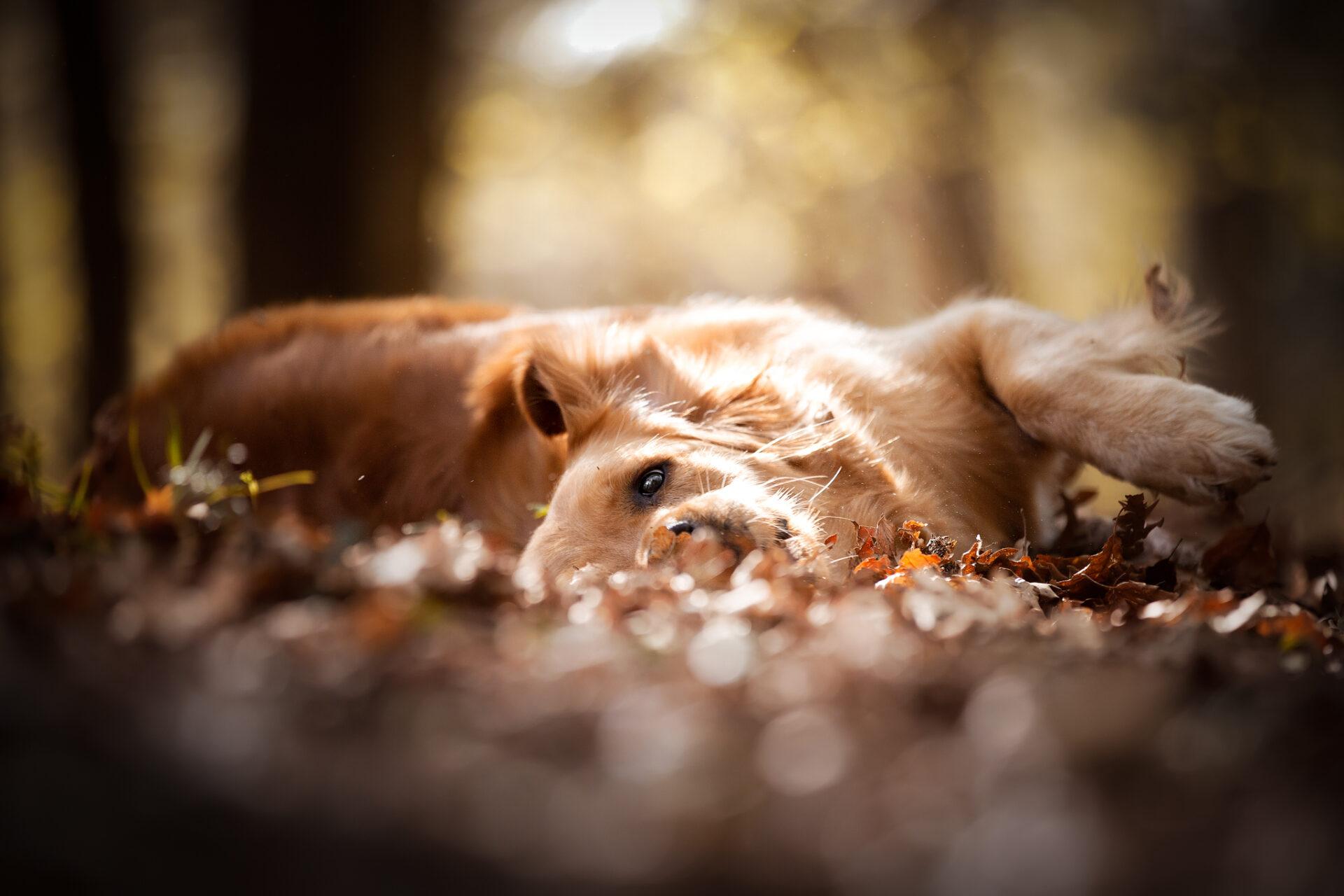 DogPhotoItaly